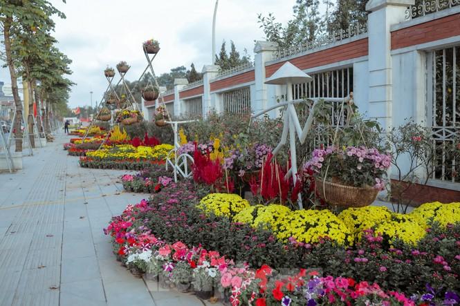 Rực rỡ sắc hoa trên phố đi bộ thành phố Vinh ngày áp tết - ảnh 8