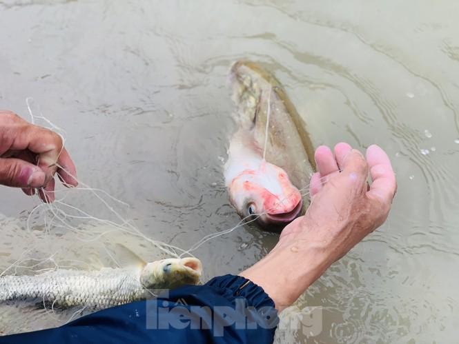 Hồ Kẻ Gỗ xả lũ, dân bất chấp săn cá dưới dòng nước trắng xóa - ảnh 15