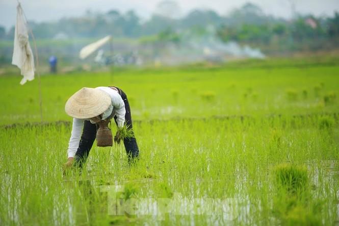 Bà con nông dân rộn ràng xuống đồng ngày đầu năm mới - ảnh 10
