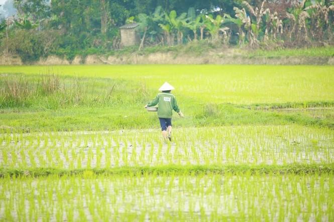 Bà con nông dân rộn ràng xuống đồng ngày đầu năm mới - ảnh 8