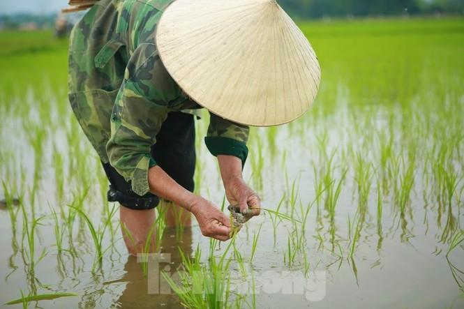 Bà con nông dân rộn ràng xuống đồng ngày đầu năm mới - ảnh 5