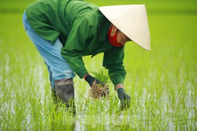 Bà con nông dân rộn ràng xuống đồng ngày đầu năm mới - ảnh 3
