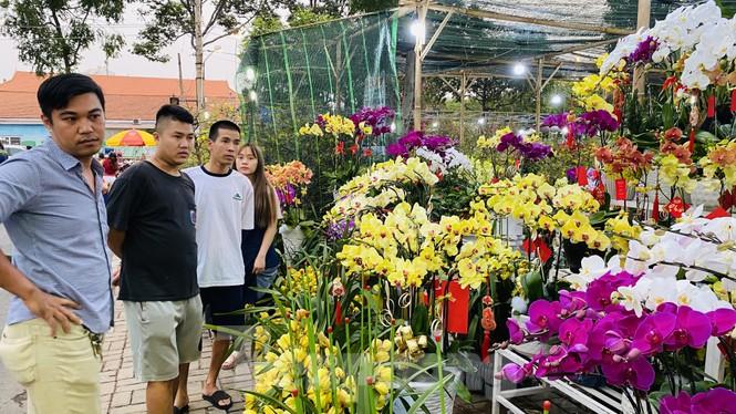 Quất cảnh hình chuột khan hiếm ở chợ hoa Sài Gòn - ảnh 10