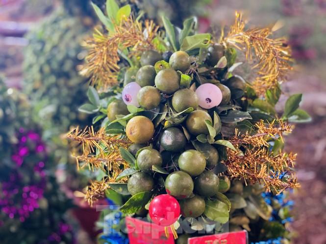 Quất cảnh hình chuột khan hiếm ở chợ hoa Sài Gòn - ảnh 2