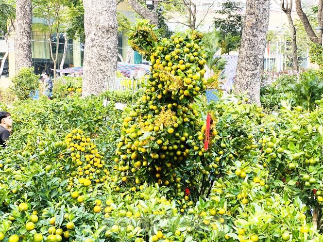Quất cảnh hình chuột khan hiếm ở chợ hoa Sài Gòn - ảnh 3
