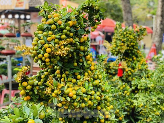Quất cảnh hình chuột khan hiếm ở chợ hoa Sài Gòn - ảnh 4
