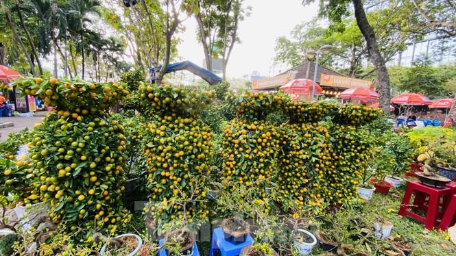 Quất cảnh hình chuột khan hiếm ở chợ hoa Sài Gòn - ảnh 6