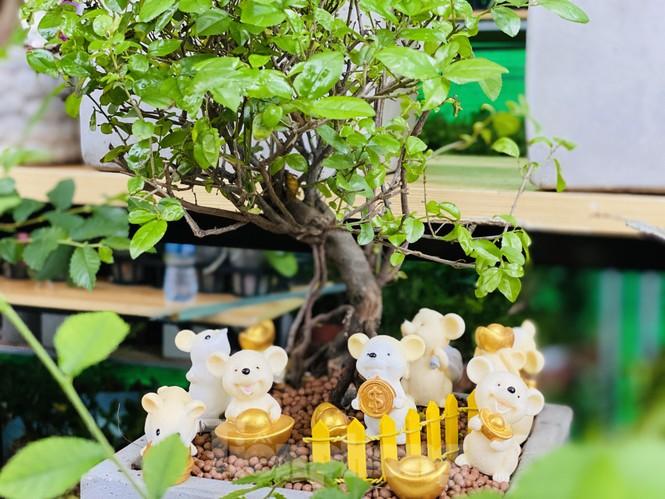 Quất cảnh hình chuột khan hiếm ở chợ hoa Sài Gòn - ảnh 8