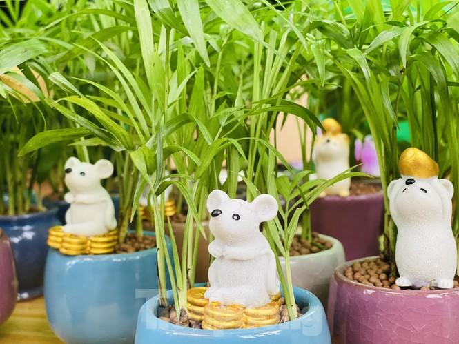 Quất cảnh hình chuột khan hiếm ở chợ hoa Sài Gòn - ảnh 9