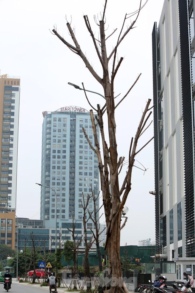 Hàng loạt cây trồng chết khô trên trục đường Cầu Giấy - Dương Đình Nghệ - ảnh 2
