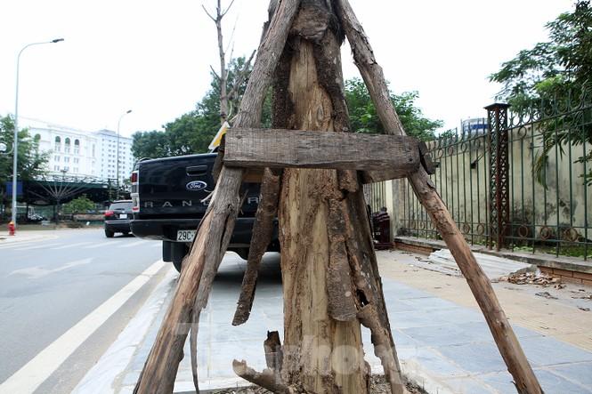 Hàng loạt cây trồng chết khô trên trục đường Cầu Giấy - Dương Đình Nghệ - ảnh 8