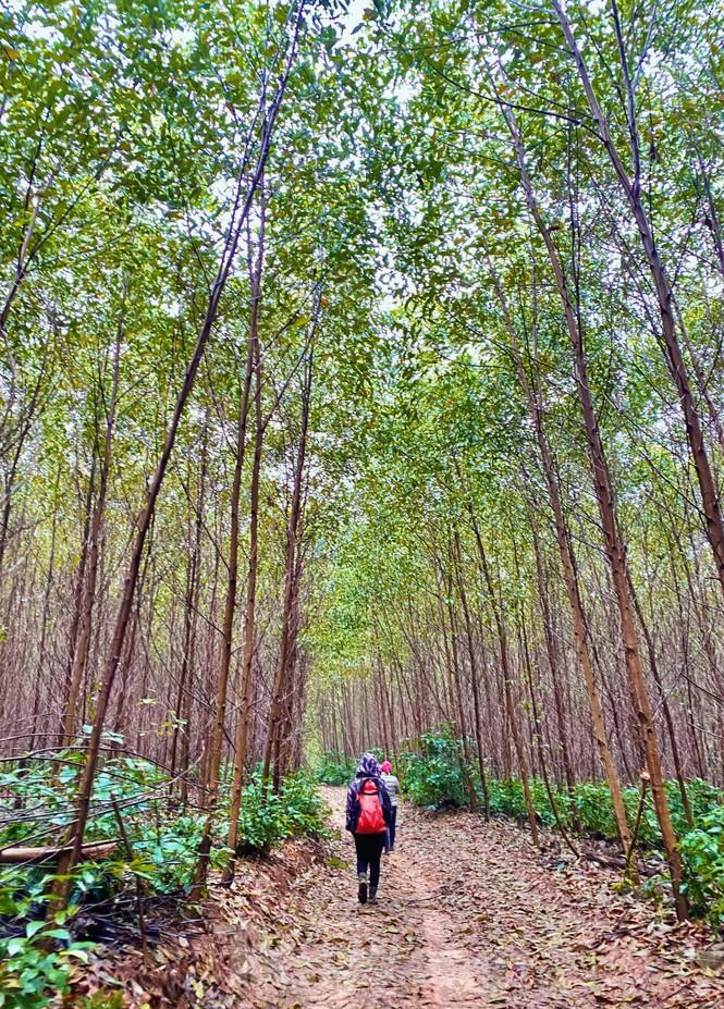 Rừng keo là một trong những điểm nhấn trên đường đi đến hang Tiên. Đây là hang khô lớn nhất thuộc hệ thống hang động Tú Làn, xã Cao Quảng, huyện Tuyên Hóa, tỉnh Quảng Bình; cách Vườn Quốc gia Phong Nha – Kẻ Bàng khoảng 70km về phía Tây.
