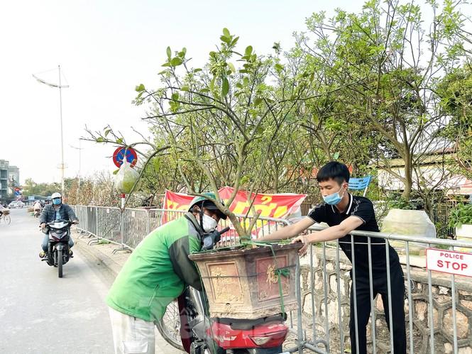 Dân Hà Thành trưng cả cây bưởi thay vì chỉ mua hoa cân như xưa - ảnh 8