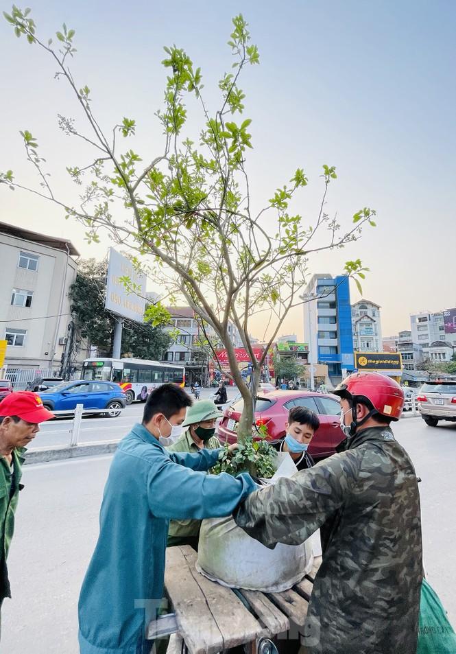 Dân Hà Thành trưng cả cây bưởi thay vì chỉ mua hoa cân như xưa - ảnh 10
