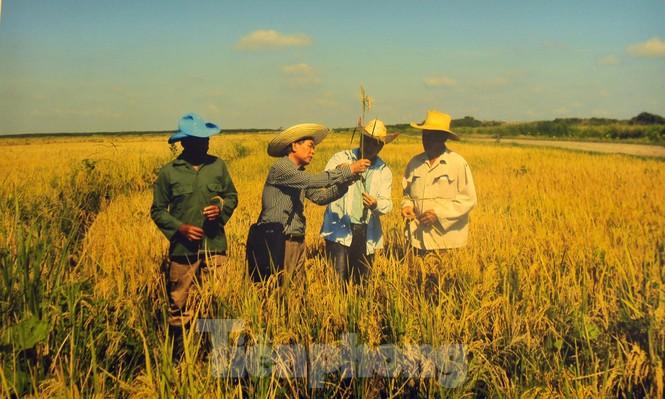 Kỷ niệm 60 năm thiết lập quan hệ ngoại giao Việt Nam - Cuba - ảnh 9