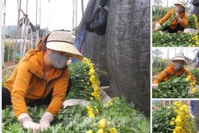 Người dân làng Tây Tựu phấn khởi vì giá hoa 'hồi sinh' - ảnh 12