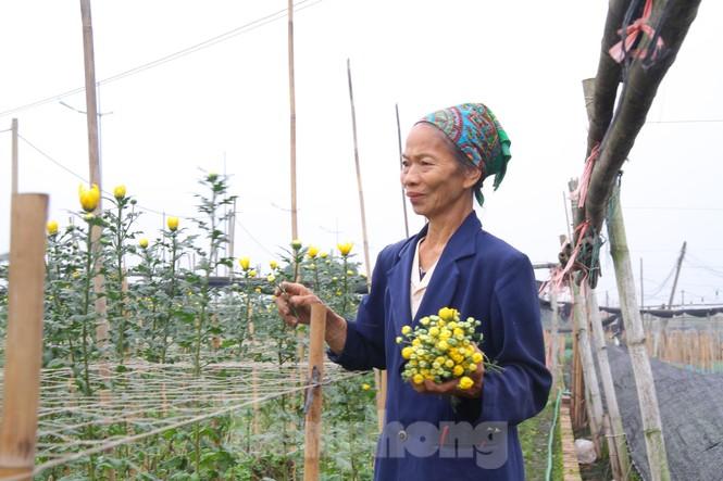 Người dân làng Tây Tựu phấn khởi vì giá hoa 'hồi sinh' - ảnh 16