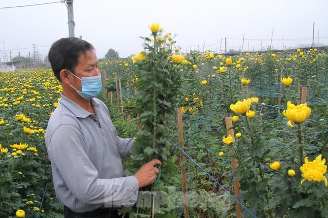 Người dân làng Tây Tựu phấn khởi vì giá hoa 'hồi sinh' - ảnh 2