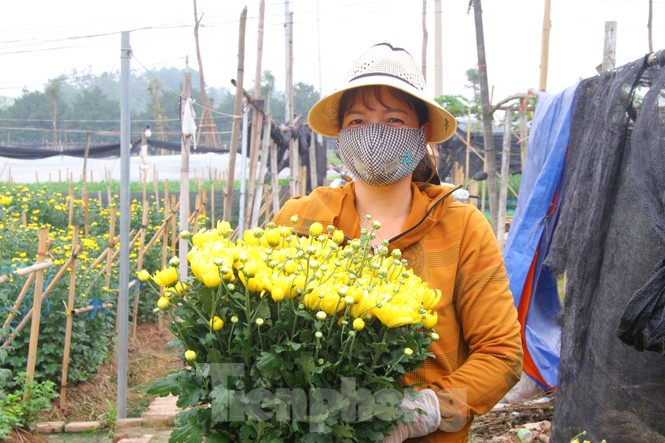 Người dân làng Tây Tựu phấn khởi vì giá hoa 'hồi sinh' - ảnh 3