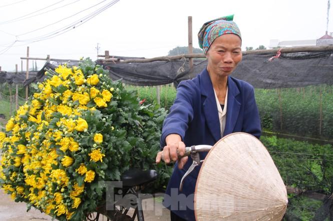 Người dân làng Tây Tựu phấn khởi vì giá hoa 'hồi sinh' - ảnh 4