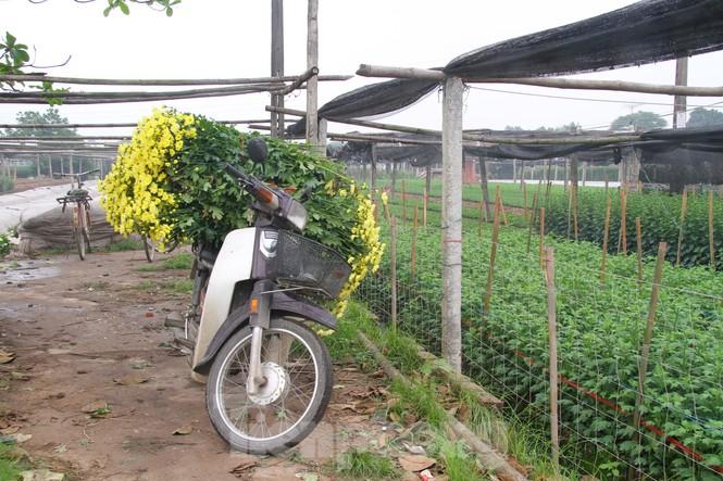 Người dân làng Tây Tựu phấn khởi vì giá hoa 'hồi sinh' - ảnh 5