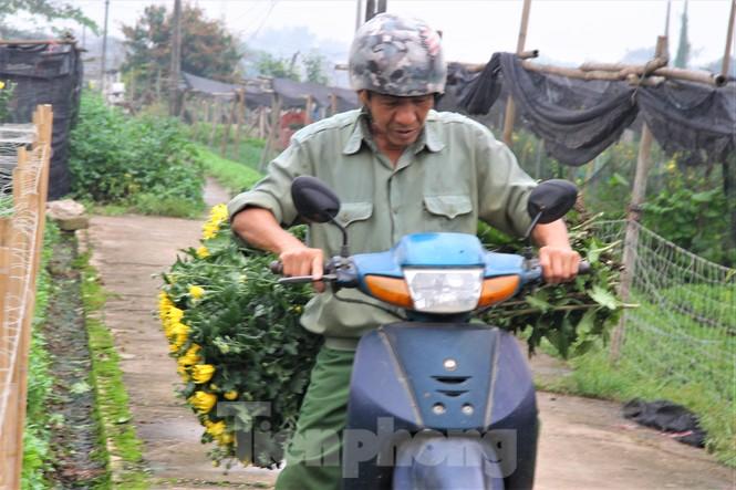 Người dân làng Tây Tựu phấn khởi vì giá hoa 'hồi sinh' - ảnh 6