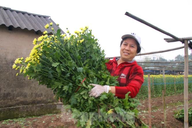 Người dân làng Tây Tựu phấn khởi vì giá hoa 'hồi sinh' - ảnh 7