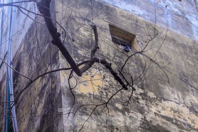 Nhiều cây sưa nghi bị đầu độc chỉ còn là cành củi khô và lá xác xơ - ảnh 10