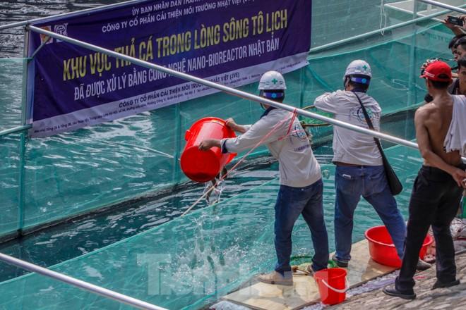 Thả cá Koi Nhật Bản xuống sông Tô Lịch và Hồ Tây - ảnh 9