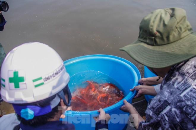 Thả cá Koi Nhật Bản xuống sông Tô Lịch và Hồ Tây - ảnh 10