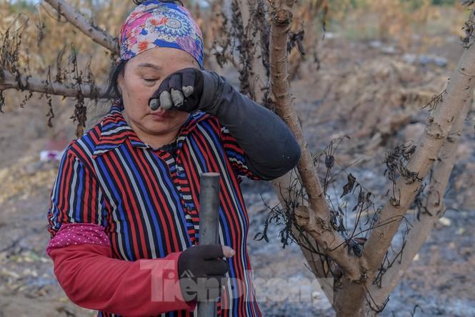 Vườn cây ăn quả bị đốt trụi cận Tết, người dân Hưng Yên khóc ròng - ảnh 4