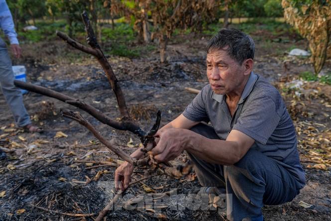 Vườn cây ăn quả bị đốt trụi cận Tết, người dân Hưng Yên khóc ròng - ảnh 5