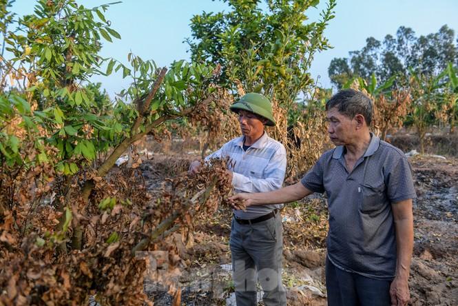 Vườn cây ăn quả bị đốt trụi cận Tết, người dân Hưng Yên khóc ròng - ảnh 6