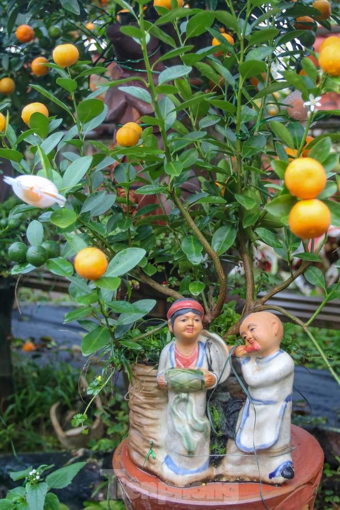 Quất bonsai có quả hình 'đĩnh vàng' hút khách ở Hà Nội - ảnh 10