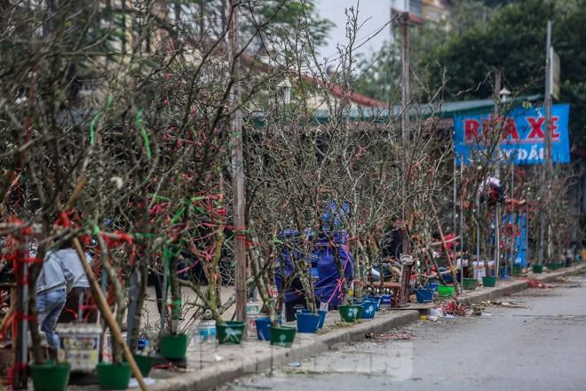 Hoa lê rừng tiền triệu hút khách Thủ đô sau Tết - ảnh 2