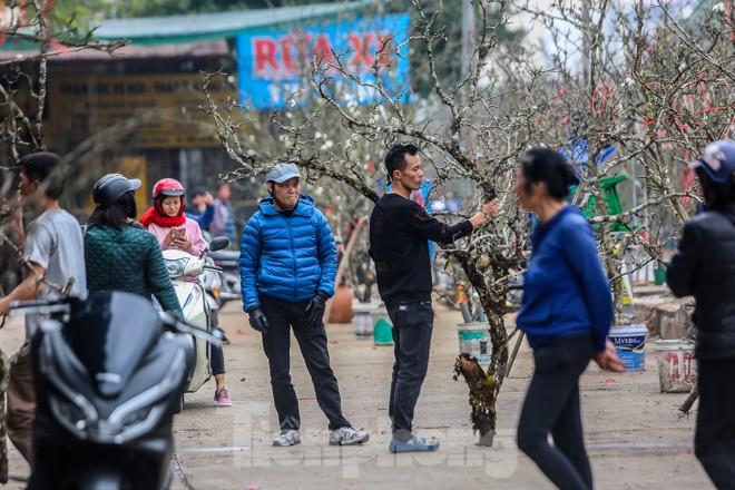 Hoa lê rừng tiền triệu hút khách Thủ đô sau Tết - ảnh 5