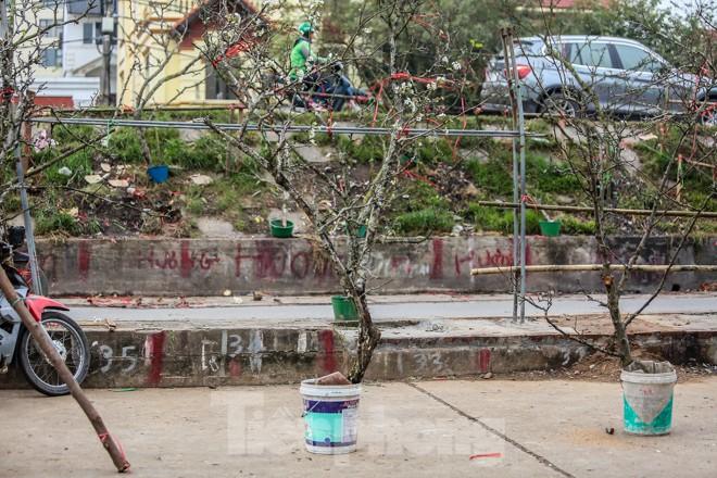 Hoa lê rừng tiền triệu hút khách Thủ đô sau Tết - ảnh 6