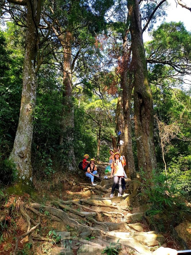 Độc đáo hàng cây trồng cổ nhất Việt Nam giữa non thiêng Yên Tử - ảnh 1