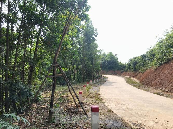 """Kỳ lạ, hàng cây tiền tỷ """"tự mọc"""" trong khuôn viên dự án ở Quảng Ninh - ảnh 1"""