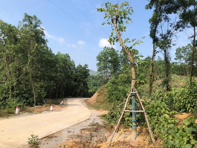 Vụ hàng cây tiền tỷ 'tự mọc': Cẩm Phả phát đi công văn hỏa tốc - ảnh 3