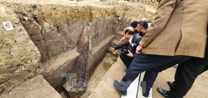 Có gì trong bãi cọc nghìn năm tuổi ở Hải Phòng? - ảnh 6
