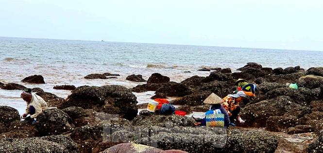 Theo chân người dân Đồ Sơn đi gõ hà biển những ngày cuối năm - ảnh 10