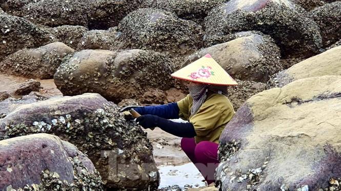 Theo chân người dân Đồ Sơn đi gõ hà biển những ngày cuối năm - ảnh 4