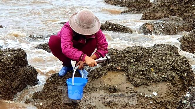 Theo chân người dân Đồ Sơn đi gõ hà biển những ngày cuối năm - ảnh 6
