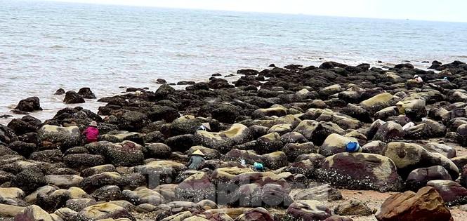 Theo chân người dân Đồ Sơn đi gõ hà biển những ngày cuối năm - ảnh 9