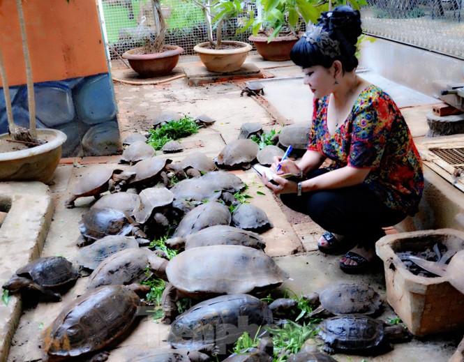 Đến chơi với đàn rùa Voi Vàng được yêu chiều hiếm thấy - ảnh 6