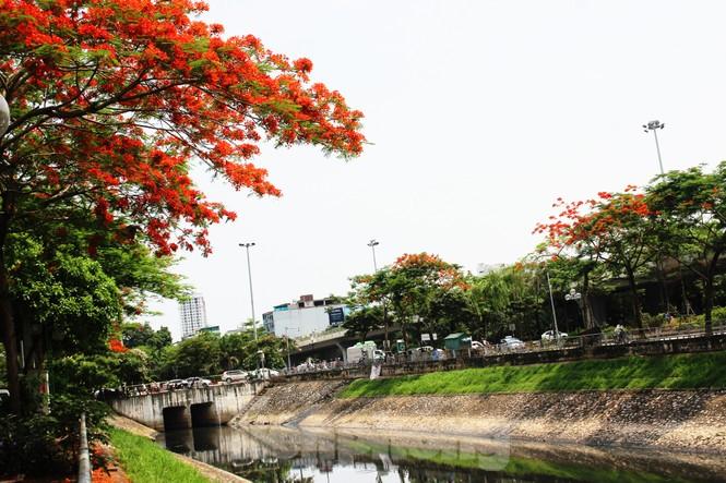 Hà Nội đắm mình trong những sắc hoa mùa hạ - ảnh 5