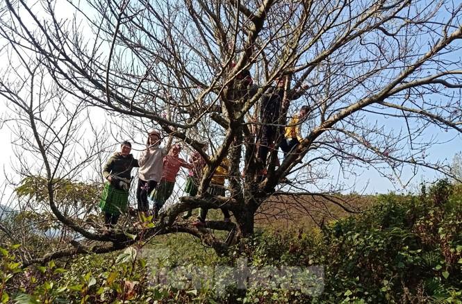 Dân buôn bỏ cuộc, dân vùng cao lo mất Tết vì đào rừng khó về xuôi - ảnh 2