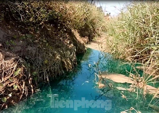 Mương nước xuất hiện màu xanh lạ, bốc mùi như thuốc sâu ở Bình Dương - ảnh 5