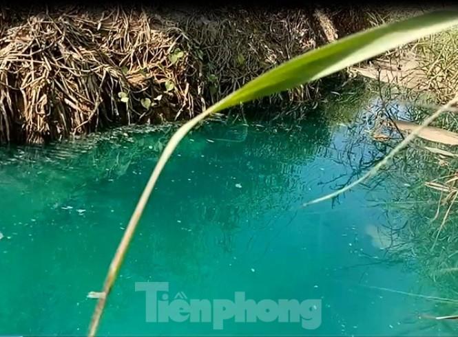 Mương nước xuất hiện màu xanh lạ, bốc mùi như thuốc sâu ở Bình Dương - ảnh 2